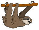 sloth-3329452_640